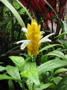 Our garden 11
