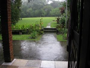 Our garden 13