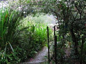 Our garden 14
