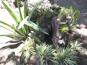 Our garden 6
