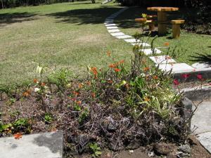 Our garden 9