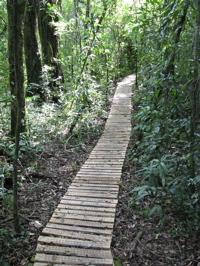 trail near Steinvorth's property