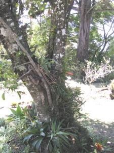 our garden 8