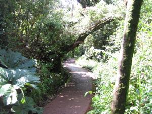 Poás trail - sendero a laguna