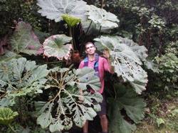 """""""Sombrilla de pobre"""" - This plant is called, """"Poor Man's Umbrella"""""""