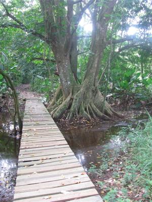Baru trail 2