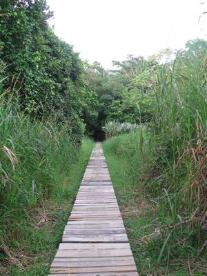 Baru trail