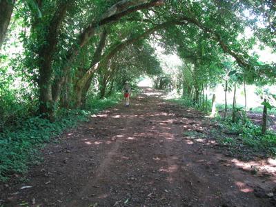 Nauyaca Road