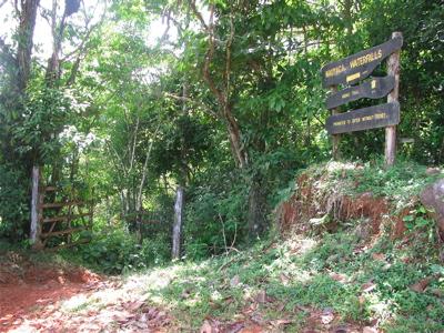 Nauyaca trail1