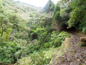 Sospechamos que este trillo dejó de ser usado cuando construyeron la autopista a Limón (ruta 32). We suspect this trail stopped being used when the Limón Highway (route 32) was completed.